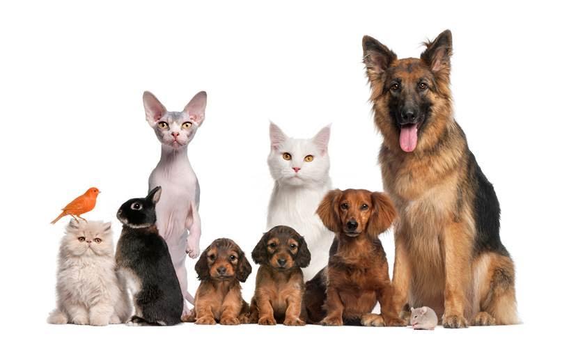 Los españoles tenemos 20 millones de mascotas