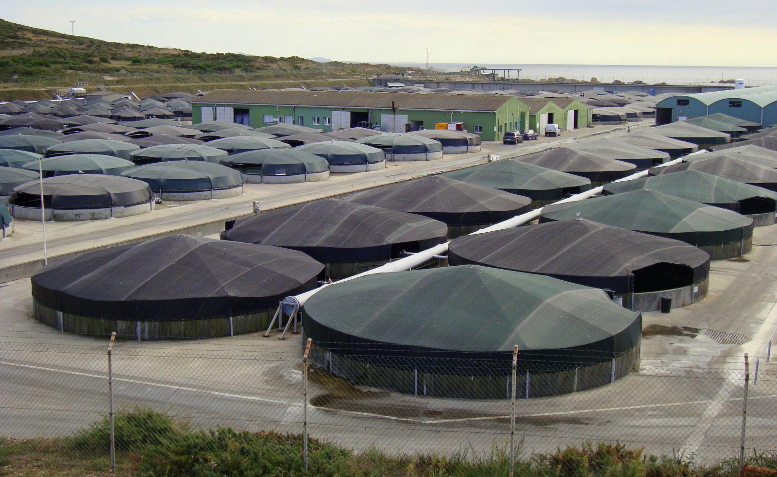Galicia acuicultura industrial y los espacios protegidos for Piscinas para tilapias