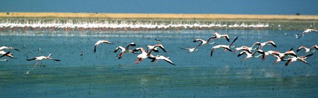 Arrancan una campaña informativa sobre el Espacio Natural de Doñana
