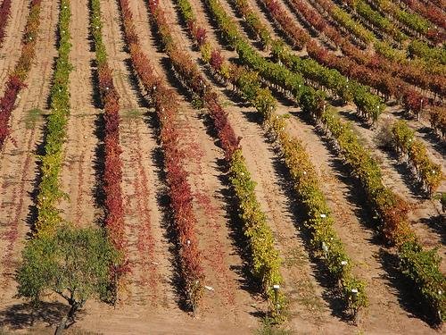 Pamplona acogerá la I Feria Internacional del Vino Ecológico