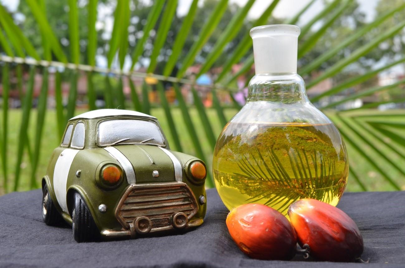 Los conductores son los principales consumidores de aceite de palma de Europa