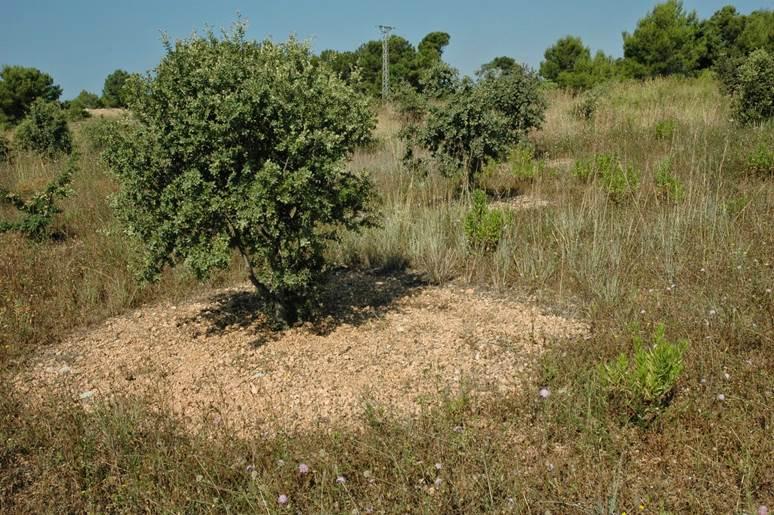 La Rioja, oleada de descatalogaciones de terrenos forestales