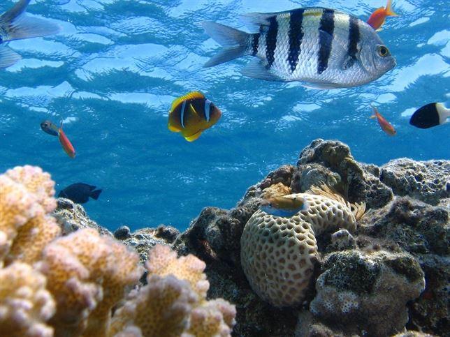 La revolución industrial marina llevará a los océanos a una extinción en masa