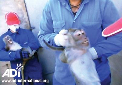 Tarragona 'capital mundial' del maltrato animal, vea el impactante video