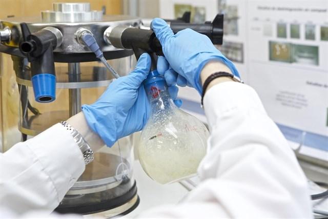 Obtener productos de limpieza o plásticos ecológicos y biodegradables con restos de champiñón es posible