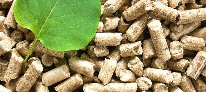 Biomasa, formación y futuro es la misma cosa