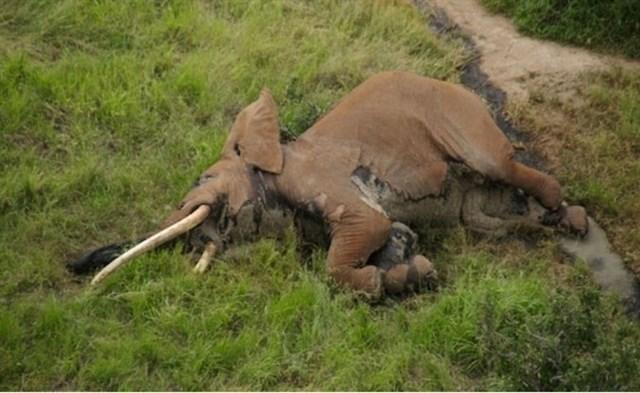 La ONU insta a los países a luchar de forma decisiva para frenar el tráfico ilegal de especies salvajes y unirse a CITES