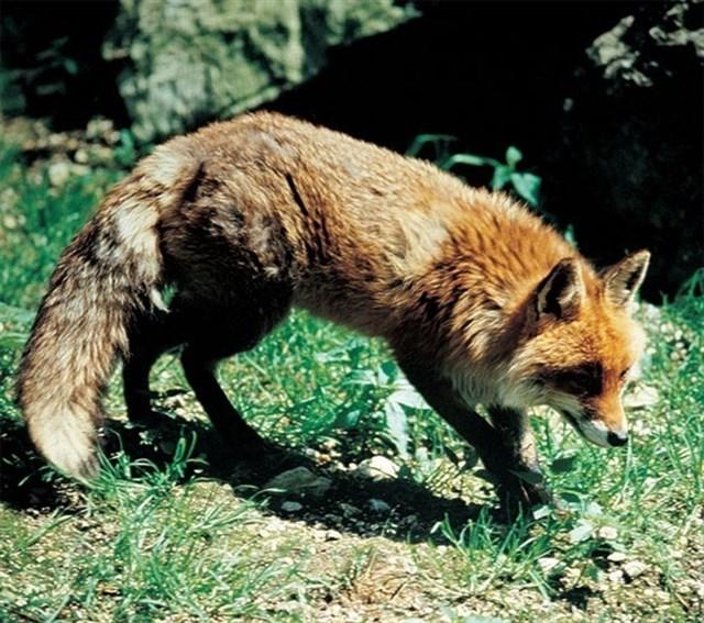 A información pública el uso de métodos de control de especies depredadoras y perros y gatos asilvestrados