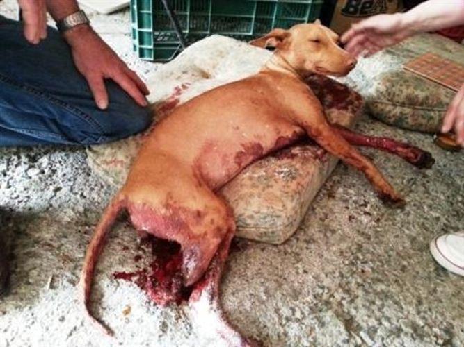 Muerte a balazos de un perro en Motril (Granada)