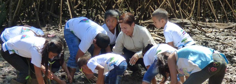 Panamá. Destacan el rol de los manglares para prevenir desastres en Chiriquí Oriente