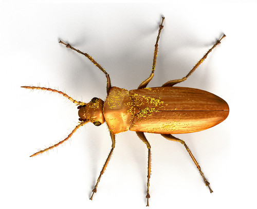 Nuevos datos sobre los insectos polinizadores de plantas cretácicas hace 105 millones de años