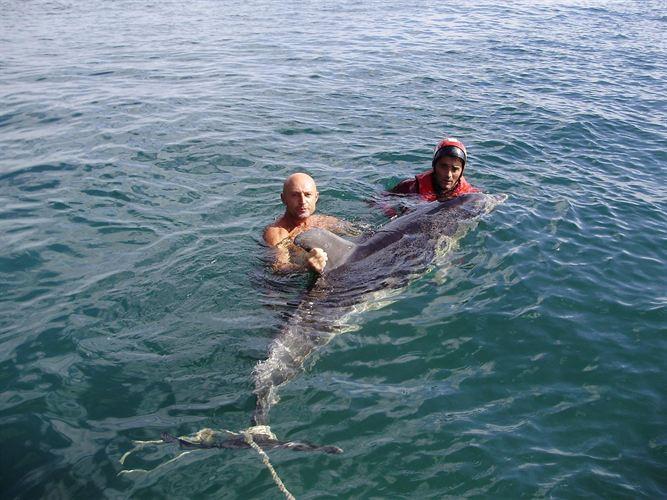 Avistados 16 delfines cerca de varias playas asturianas