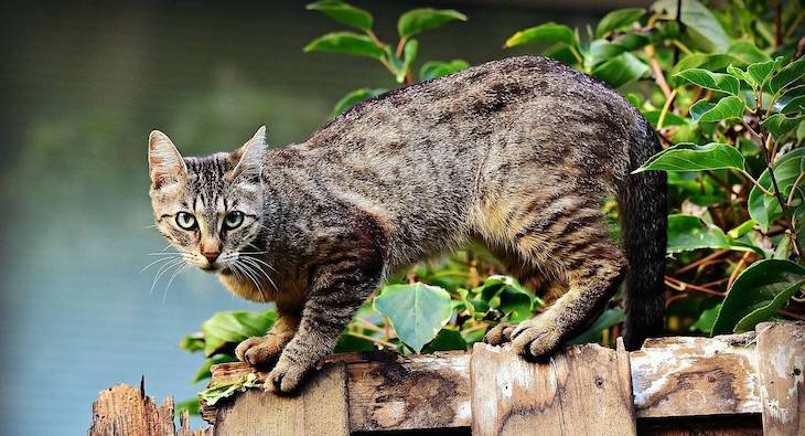 ¿Por qué los gatos tiene uno u otro color?