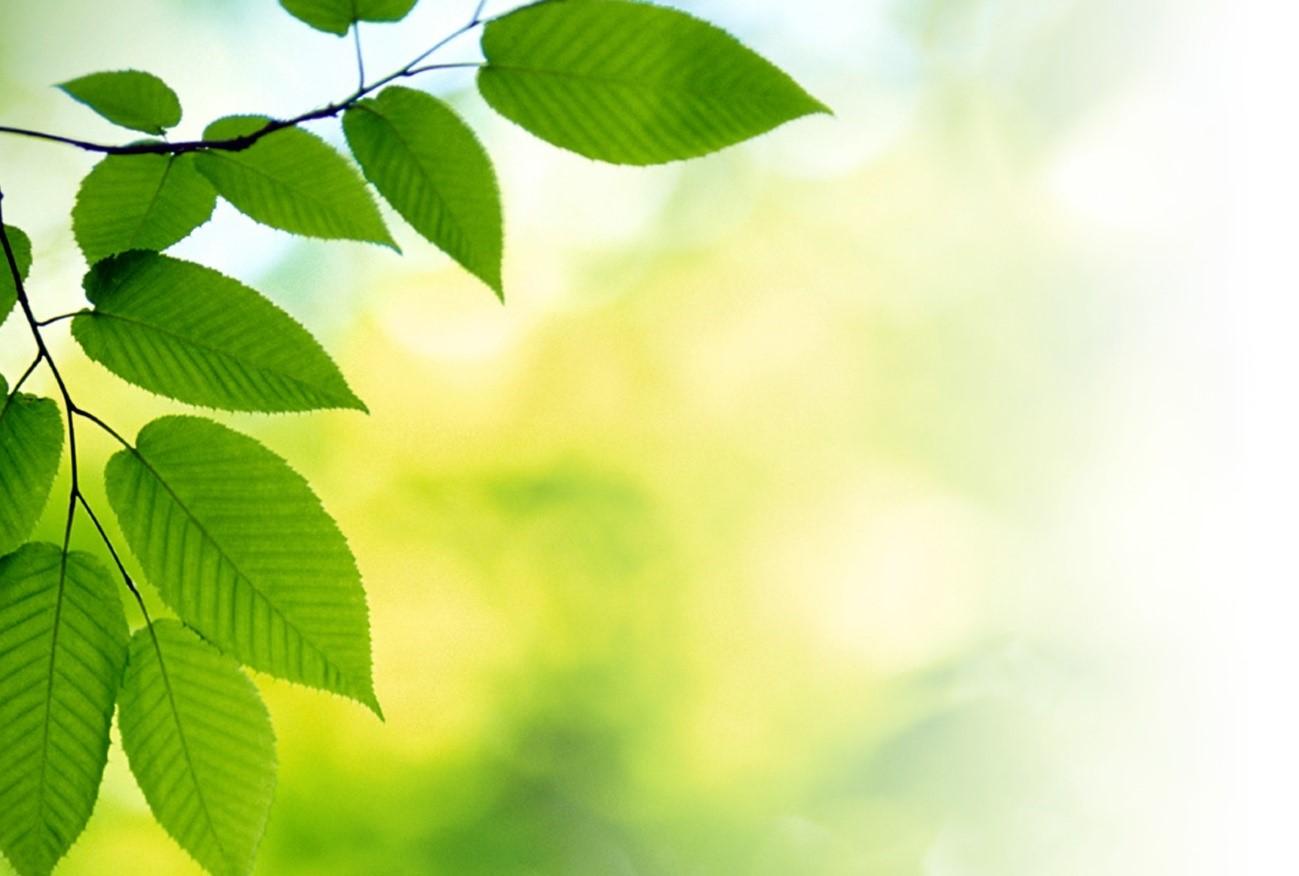 Las innovaciones verdes se multiplican