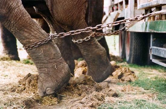 El Parlament escucha los argumentos morales, científicos y jurídicos para prohibir los circos con animales en Catalunya