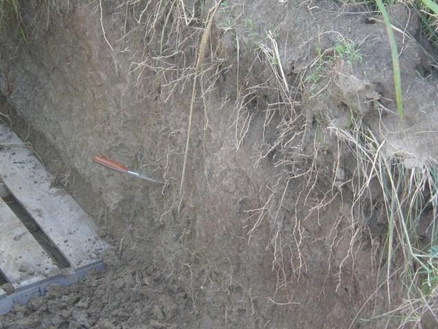 Cultivos de cobertura protegen el suelo de temperaturas extremas