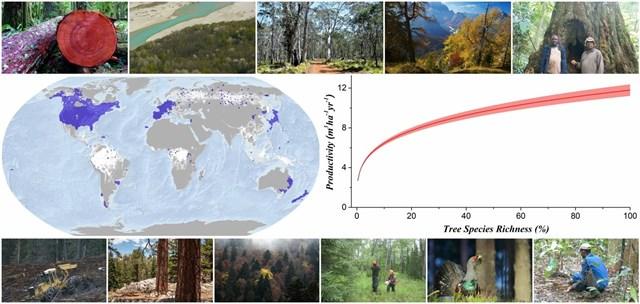 A menos biodiversidad en los bosques, menos productividad