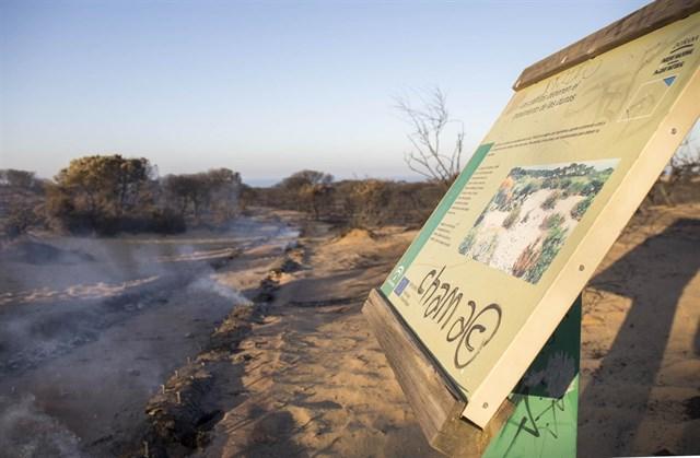 Tejerina y Báñez visitan los trabajos de restauración forestal en Doñana tras el incendio