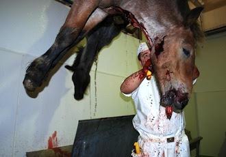Desmantelan una red internacional con conexión en Galicia que comerciaba con carne de caballo no apta para el consumo