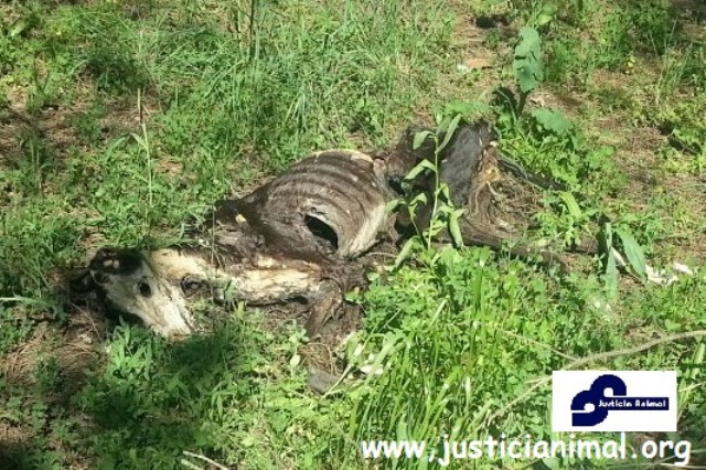 La federación de asociaciones protectora y de defensa animal aportará ante los juzgados pruebas de la terrilbe situación de los galgos en españa