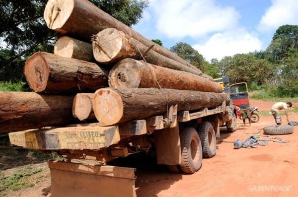 Los indígenas de la Amazonia se 'rebelan' contra las empresas madereras