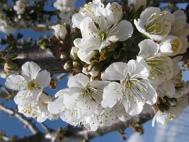 INTIA realiza unas jornadas sobre producción ecológica en fruticultura, cerezo y transición a cultivos hortícolas