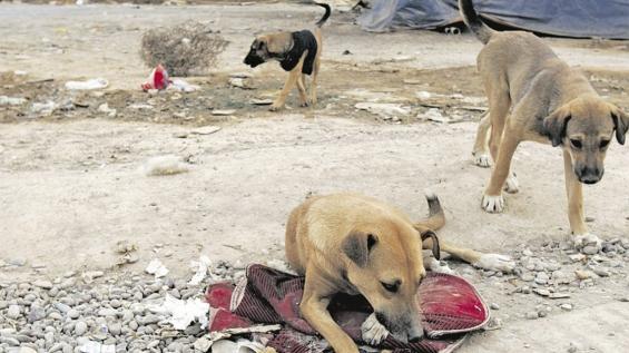 Buenos Aires: Hay alrededor de 6 millones de perros en situación de calle en el Conurbano
