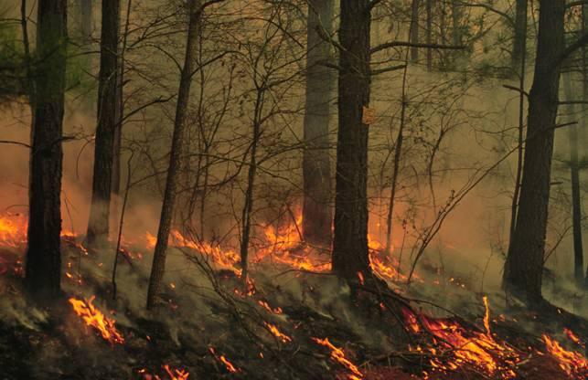 La paja es el mejor 'aliado' para recuperar suelos afectados por incendios forestales