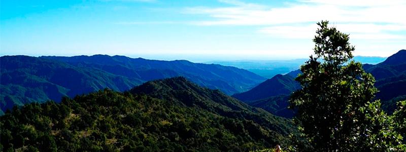 Selva y bosque: la maravillosa biodiversidad de Sierra La Laguna