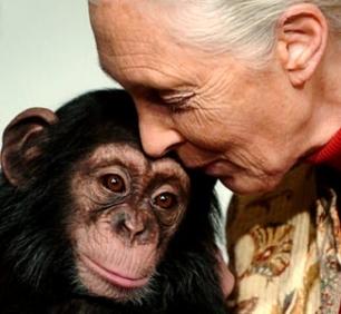 """""""La población humana está expulsando a los animales salvajes al borde de su extinción"""""""