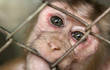 Igualdad Animal reclamará el domingo el fin de la experimentación científica en animales