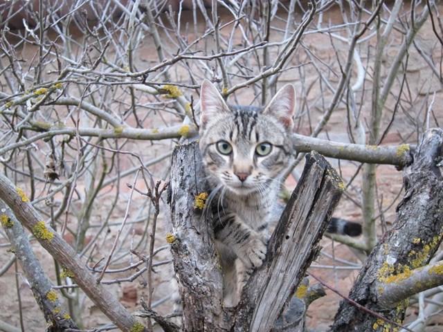 Llevarán a los tribunales la autorización de la Junta al uso de nuevas trampas para cazar predadores