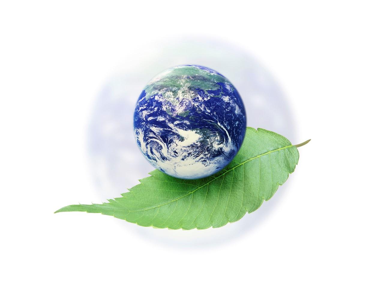 La declaración de Tbilsi en pro de la formación ambiental