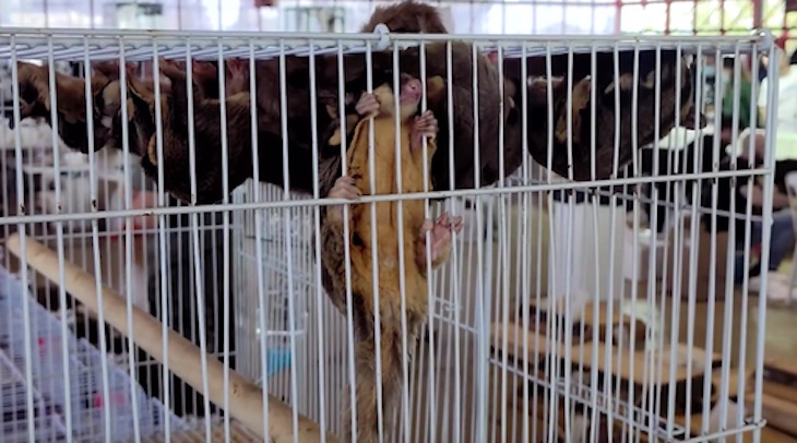 Hay que poner orden en las ferias y exposiciones de animales silvestres