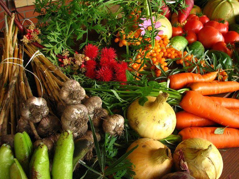 La Diputación de Soria firma un convenio con Asfoso para el desarrollo agroecológico en zonas de montaña