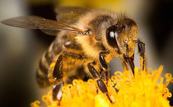 Dos insecticidas 'arrasan' con las abejas