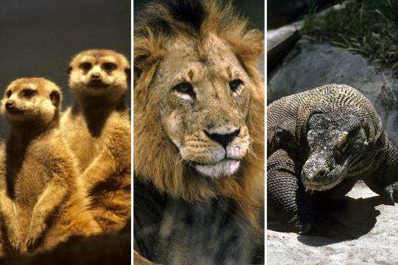 Naciones Unidas insta a los países a luchar contra el tráfico ilegal de especies