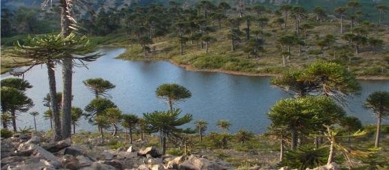 Argentina: El impenetrable chaqueño cautiva al turismo internacional