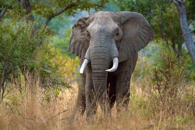 Los furtivos están acabando con todos los elefantes en la Reserva de Selous, Tanzania
