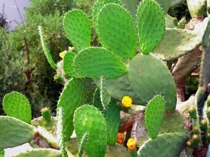 México: Día nacional de las cactáceas 2021