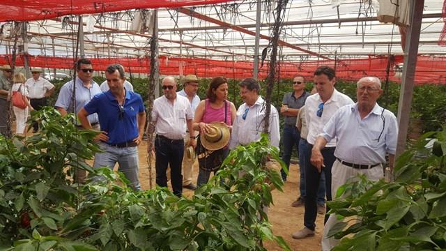 El Campo de Cartagena incrementa la superficie de producción ecológica más de un 30% en los últimos cinco años