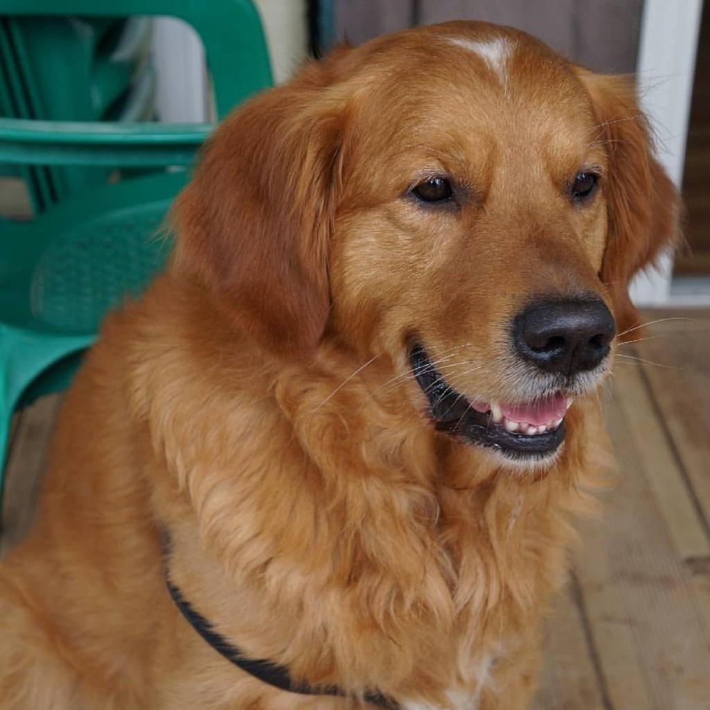 Campaña municipal en Gines para concienciar en la recogida de los excrementos caninos de la vía pública