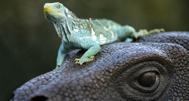 Komodo, el lugar donde viven los dragones