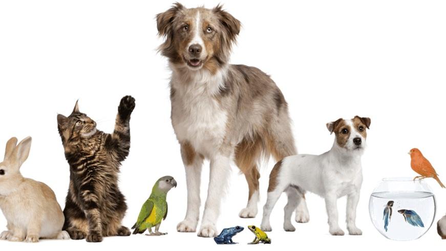 Las mascotas no son 'cosas'