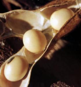 Efecto bumerán en Monsanto, en los Estados Unidos