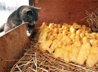 Holanda pone una unidad policial al servicio de los animales
