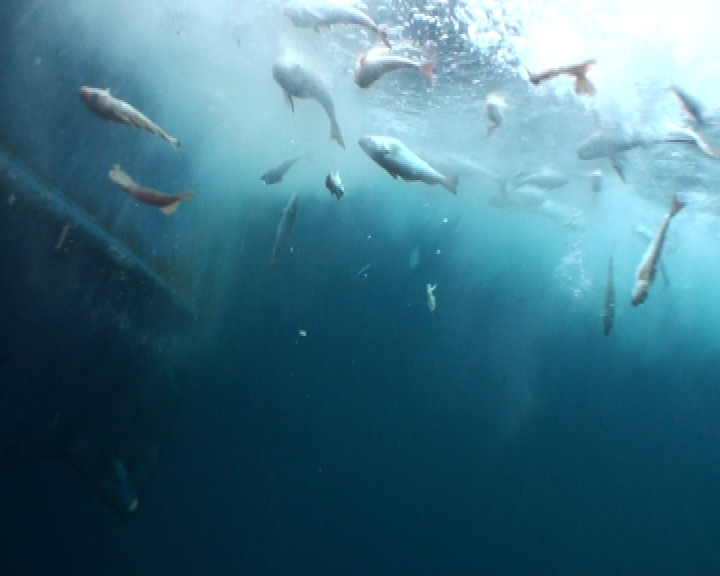 'Salvados' denuncia con Niunpezporlaborda.org el desperdicio sin sentido de pescado