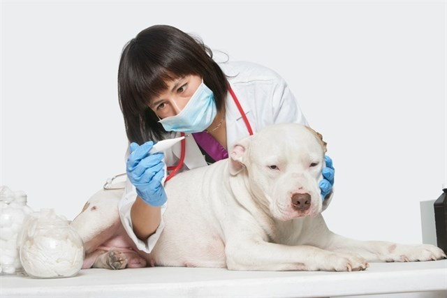 ¿Qué pasa con el IVA veterinario?