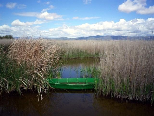 Las Tablas de Daimiel tienen turbidez en sus aguas, con presencia de peces invasores