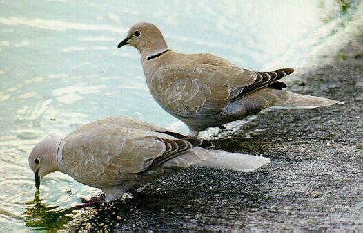 La evolución de algunas aves puede ser dirigida y acelerada por los cambios de comportamiento